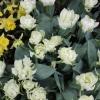 Spring Flower Garden Show EB (8).JPG