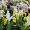 Spring Flower Garden Show EB (9).JPG