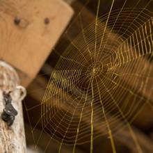 Spider's web - Catherine Bertola